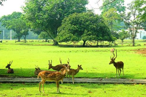 PKS Minta Pemerintah Evaluasi Komersialisasi Kebun Raya
